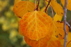 Fall Color Simplicity royalty free stock images