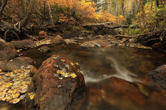 Fall color by a stream in the Utah mountains. Royalty Free Stock Images