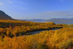 Fall color of Sweden. This image is taken at Abisco National Park in Sweden Stock Photos