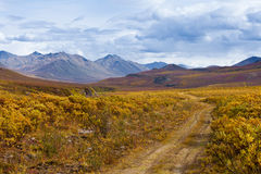Fall color Tombstone Territorial Park Yukon Canada Royalty Free Stock Images