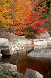 Fall Color Royalty Free Stock Photo