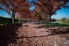 Fall color trees stock images