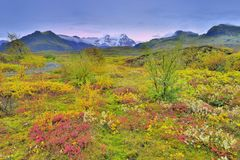 Iceland Fall color of tundra Royalty Free Stock Photo
