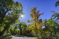 Fall color of Valyermo royalty free stock photography