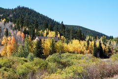 Fall in Colorado Stock Image