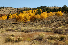 Fall in Colorado Stock Photography