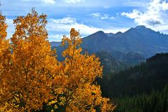 Fall colored Aspen Leaves in Rocky Mountain National Park stock images