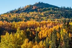 Fall Colored Aspens Near Cripple Creek Royalty Free Stock Photos