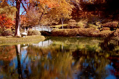 Fall Colored Foliage in a Japanese Garden. A Peaceful Japanese Garden filled with fall colors and foliage Royalty Free Stock Photography