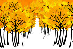 Fall colored forest Royalty Free Stock Photography