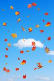 Fall colored leaves falling on a Blue sky clouds Royalty Free Stock Photo