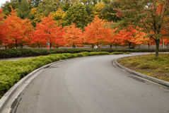 Fall Colored Road Stock Images