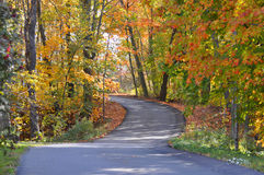 A fall Colored Road Stock Image