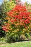 Fall Colored Trees Stock Photography