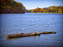 Fall colored trees landscape. A beautiful landscape of calm waters, a floating log, and distant fall colored trees in the background Stock Images