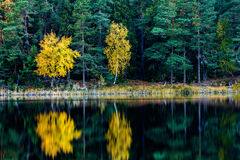 Fall colored trees Royalty Free Stock Photos