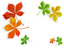 Fall colorful chestnuts leaves Royalty Free Stock Images