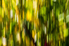 Fall. A colorful foliage blur seen from a fast-moving car  beneath tree crowns Royalty Free Stock Photo