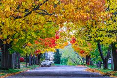Fall colorful in New Brunswick, Canada. Autumn in Canada with the red leaves royalty free stock photography