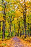 Fall colorful in New Brunswick, Canada. Maple tress in changing season, Fall colorful in New Brunswick, Canada stock images