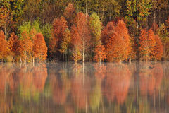 Fall - Colorful Reflections in NC. Beautiful bright fall colors reflected in the still waters of Lake Howell in Concord, NC royalty free stock images