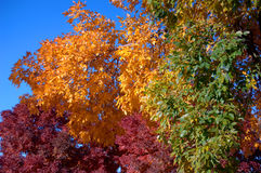 Fall Colors 1. Red, yellow and grean fall colors Stock Photo