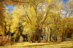 Fall colors 10. Brilliant fall colors in the mountains of Utah Royalty Free Stock Photo