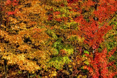 Fall colors stock images