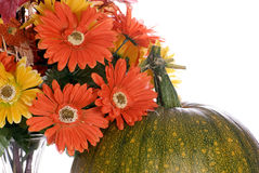 Fall Colors. Closeup view of the top of a pumpkin changing colors and some artificial flowers next to it, isolated against a white background Royalty Free Stock Photography