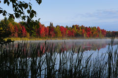 Fall colors. In background, pond and fog in foreground Royalty Free Stock Images