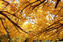 Fall Colors. In an Englewood, Colorado park in 2006 royalty free stock image