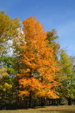 Fall colors. Rochester, New York stock photography