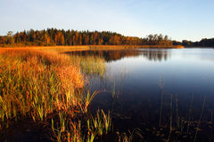 Fall colors. Reflected in a smooth lake Royalty Free Stock Photography