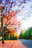 Fall colors. Final swirl of fall colors on a quiet road. Tilt shift lens with focus on leaves in foreground royalty free stock photography