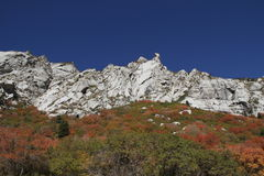 Fall colors. Fall color up little cottonwood canyon utah stock images