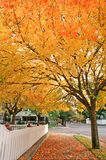Fall colors. Street with fall colors, sonoma county CA Stock Photos