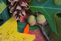 Fall Colors. Acorns,leaves,pinecones  & crayons in park Royalty Free Stock Photo
