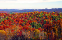 Fall colors. Forest in the appalachian mountains in north carolina showing fall colors