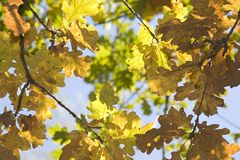 Fall colors. Fall background , nice yellow leaves in september Stock Image