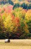 Fall Colors. Leaves changing color in October in  Wisconsin Royalty Free Stock Photography