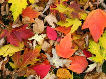 Fall Colors. Autumn leaves on the ground stock image