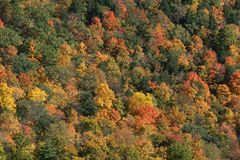 Fall Colors Stock Image