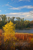 Fall colors. A forest and river in Autumn Stock Photos