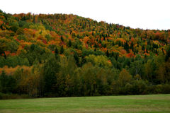 Fall colors. Fall colrs displayed on a hillside of trees Royalty Free Stock Photo