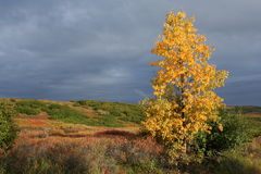 Fall Colors. Against a stormy background in Denali National Park Royalty Free Stock Image