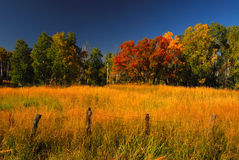 Fall Colors. Fence line and fall colors in beautiful Colorado Stock Images