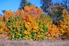 Fall Colors 7. Red, yellow and grean fall colors Royalty Free Stock Image