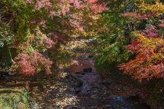 The fall colors above a small mountain stream on the side of Oya. Ma, a sacred mountain near Isehara, Kanagawa, Japan Stock Photos
