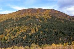 Fall Colors in Alaska Stock Image