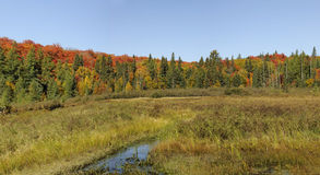 Fall colors in algonquin park Stock Photography